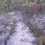 Rock steps to Lillian's Glen (10175)