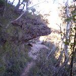 Track beneath rock (10184)