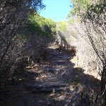 Track through thick heath (102424)