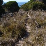 Track through low grass (102451)