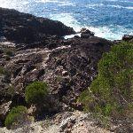 White Horse Bay coastine (102481)