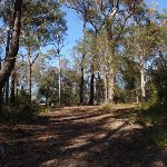 Track up the hill to Bournda Trig (103411)