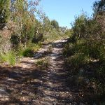 Track up to the summit and Bournda Trig (103450)