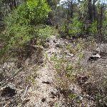 Track to Field Study Huts (103651)
