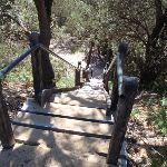 Stairs up dunes behind Wallagoot Beach (104929)
