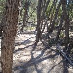 Track through melaleuca trees (104971)