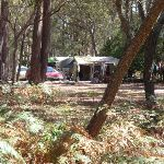 Hobart Beach camping area (105097)