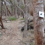 Track marker bolted into tree (105568)