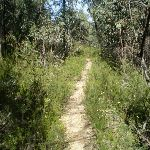 The Wonderland Track (10568)