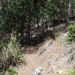 Track along the creek bank (105778)