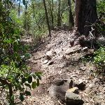 Track up the hill south of Sandy Bch Ck (106009)