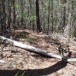 Log across the track (106060)