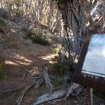 Information sign just above Saltwater Creek Beach (106114)