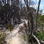 Track behind North Tura Beach (106315)