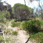 Track behind North Tura dunes (106339)
