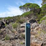 Light to Light track post near Hegartys Bay (106399)