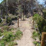 Track behind North Tura dunes (106558)