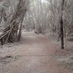 Track to Bournda Lagoon (106846)