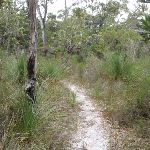 Track through dry eucalypt forest (106864)