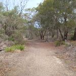 Track to Bournda Beach car park (106954)
