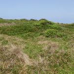 Bournda Island heath (107122)