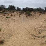 Back of beach to stairs up dunes (107164)