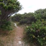 Banksia bush beside bush (107329)