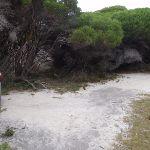 Track through thick vegetation (107518)