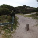 Track to Green Cape Lighthouse from car park (107542)