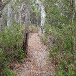 Track between lookouts (107860)