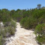White sandy track (112846)