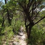 following the Bullawarring Track (114352)