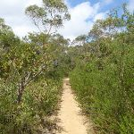 heading through the dense bushland (114934)