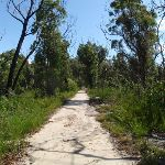 Wide trail east of Mt Kuring-gai (116791)