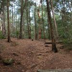Gibbergong track near Lovers Jump creek crossing (117256)