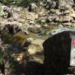 Warrimoo Track pass the creek (117724)