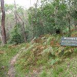 Signpost along Birrawana Track (119644)