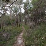 Birrawana Track (119698)