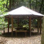 Leura Forest Pagola (11984)