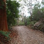 Bare Creek Track (120610)