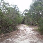 Service trail along pipeline track (122077)