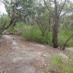 Rock platform on Bungaroo track (122275)