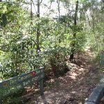 Governor Phillip track near pipe bridge (124405)
