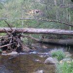 The Kedumba River (12604)
