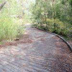 Bottom of Davidson Track (126352)