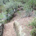 winding through the bush on Governor Phillip walk (126457)