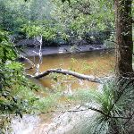 Middle Harbour Creek (126481)