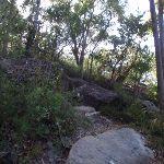The rocky bushtrack (127672)