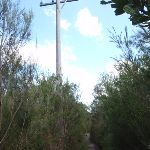 Passing an old telegraph pole (128584)