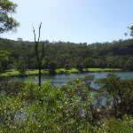 Back to Middle Harbour Creek (130810)
